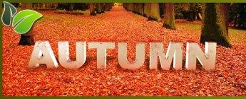 autumn_evrg