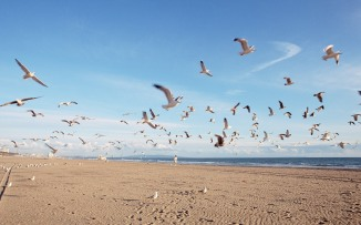 seagulls-roaming-the-beach