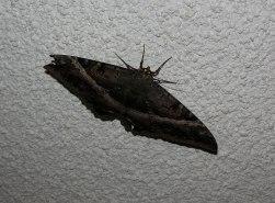 black_moth_2.05.14_2
